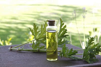 Best Essential Oils to Cure Headaches