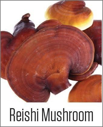 Reishi Mushroom in MOA