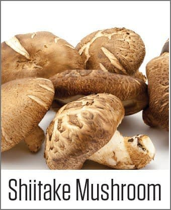 Shiitake Mushroom in MOA