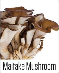 Maitake Mushroom in MOA