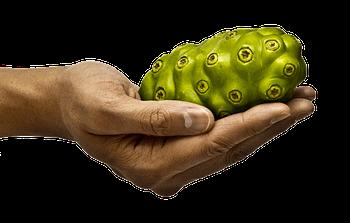 noni fruit