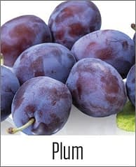 Plums in MOA
